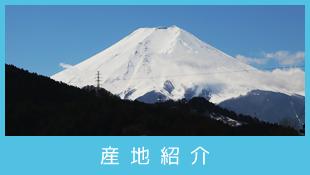 山梨県西桂産地紹介